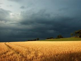 Обои Тучи на поле: Свет, Тучи, Поле, Гроза, Прочие пейзажи