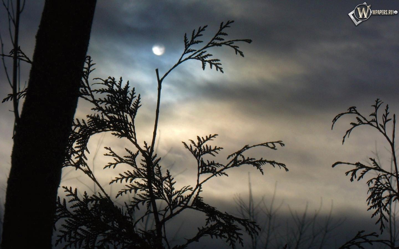Луна за ветками 1440x900