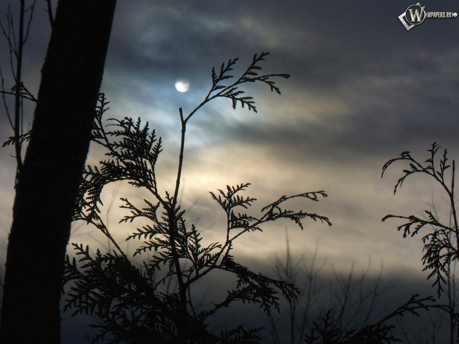 Луна за ветками 1600x1200
