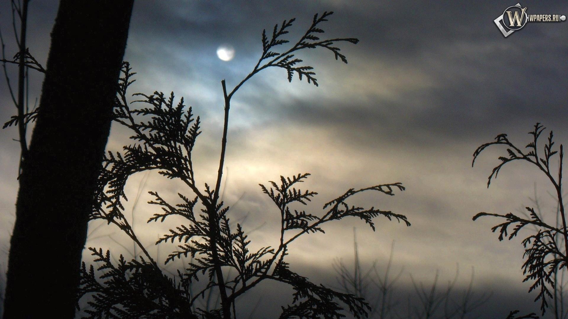 Луна за ветками 1920x1080