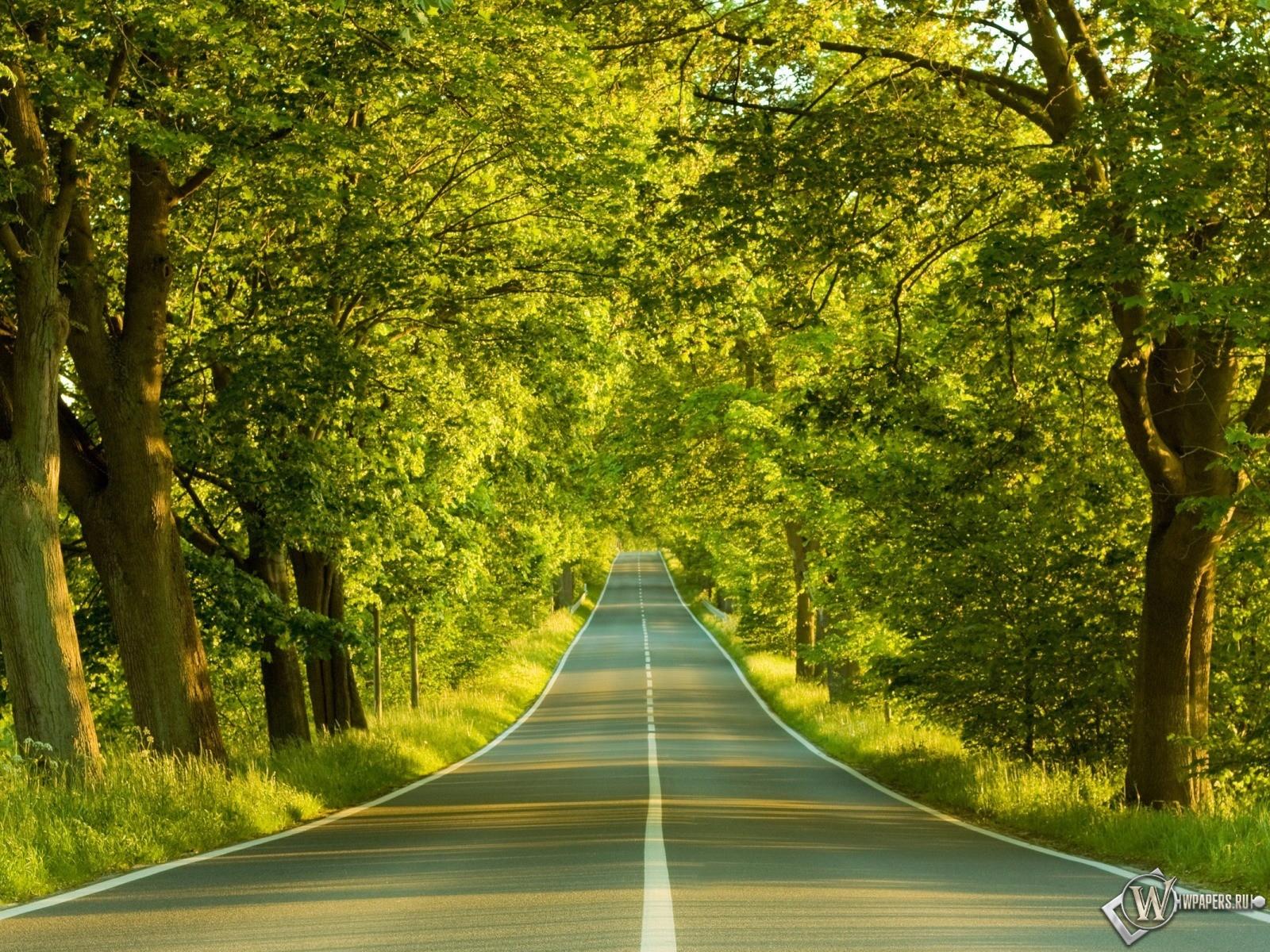 Дорога в лесу 1600x1200