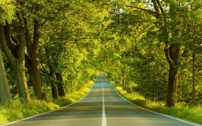 Обои Дорога в лесу: Дорога, Лес, Деревья, Весна, Прочие пейзажи
