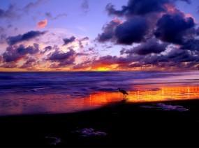 Обои Морской закат: Облака, Море, Закат, Аист, Вода и небо
