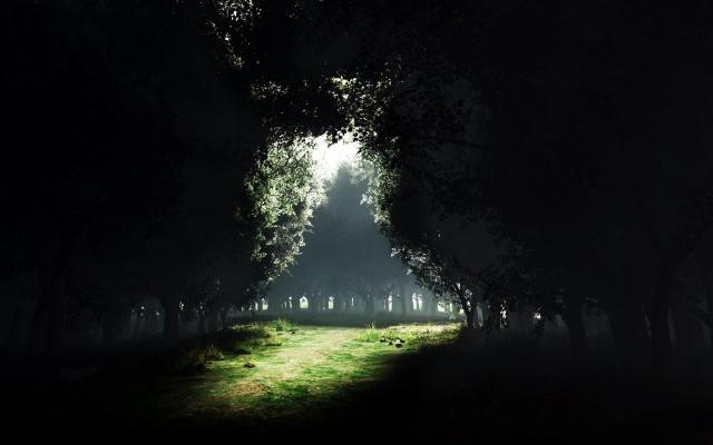 Поляна в густом лесу
