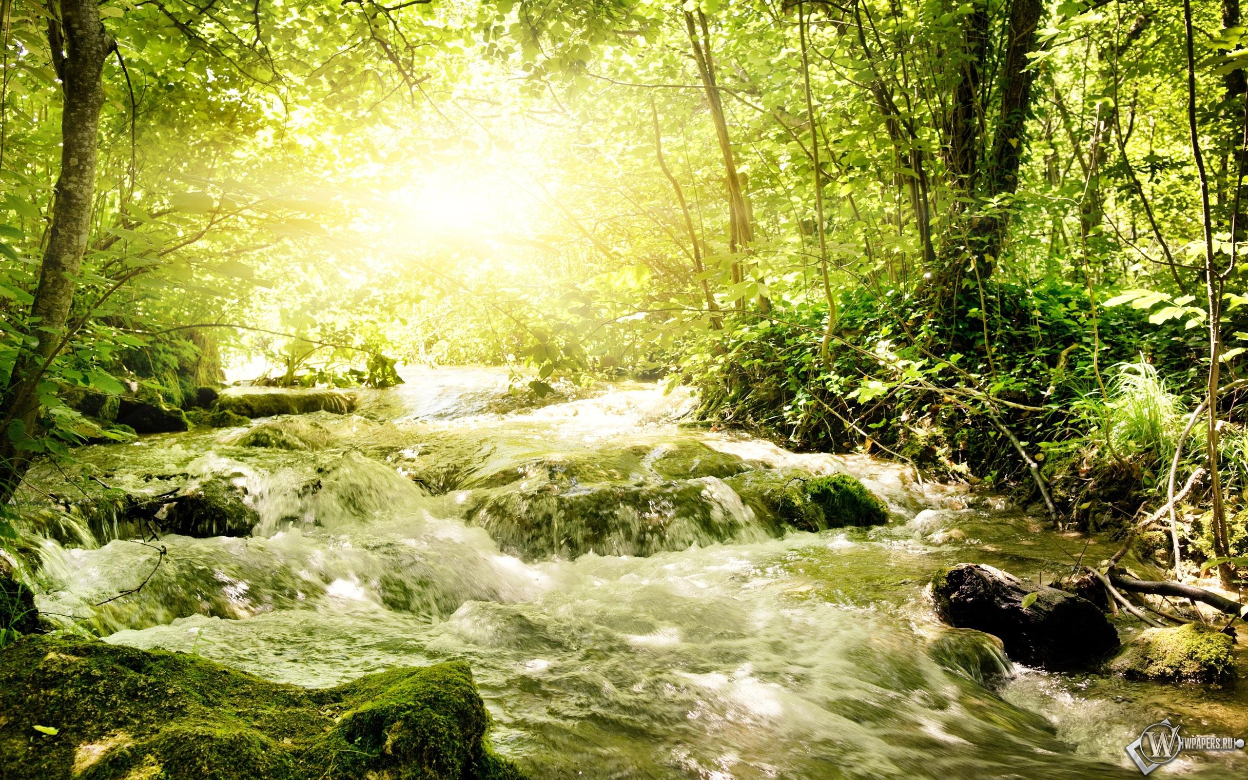 Бурная речка в лесу 2560x1600