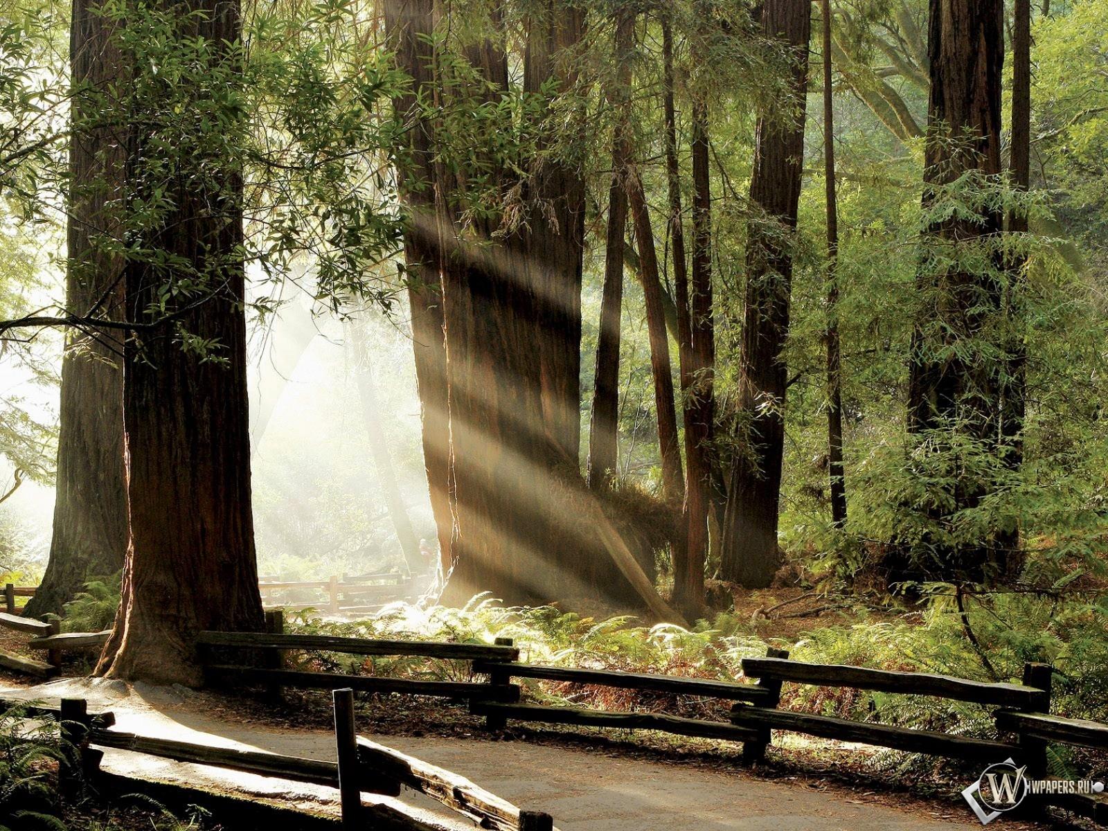 Лучики в лесу 1600x1200