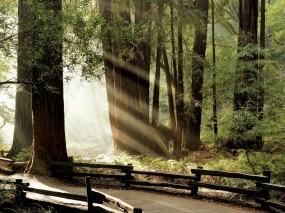 Обои Лучики в лесу: Свет, Дорога, Лес, Забор, Лучи солнца, Прочие пейзажи