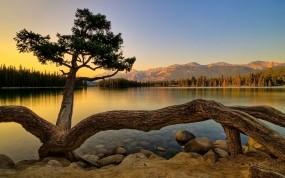 Обои Живучее дерево: Камни, Озеро, Дерево, Прочие пейзажи
