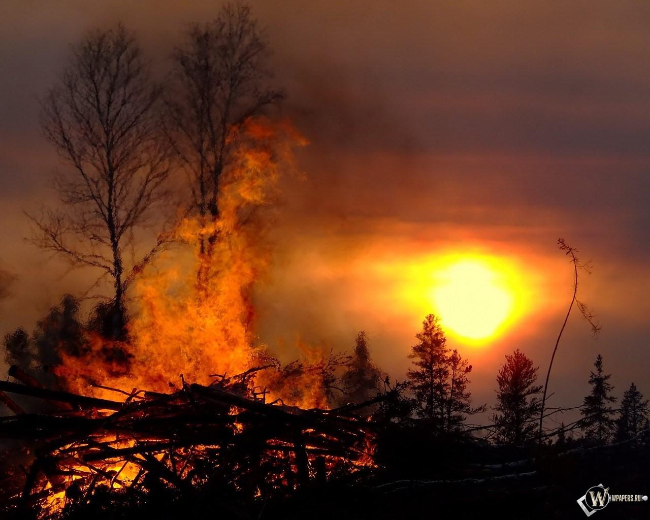 Лесные пожары 1280x1024