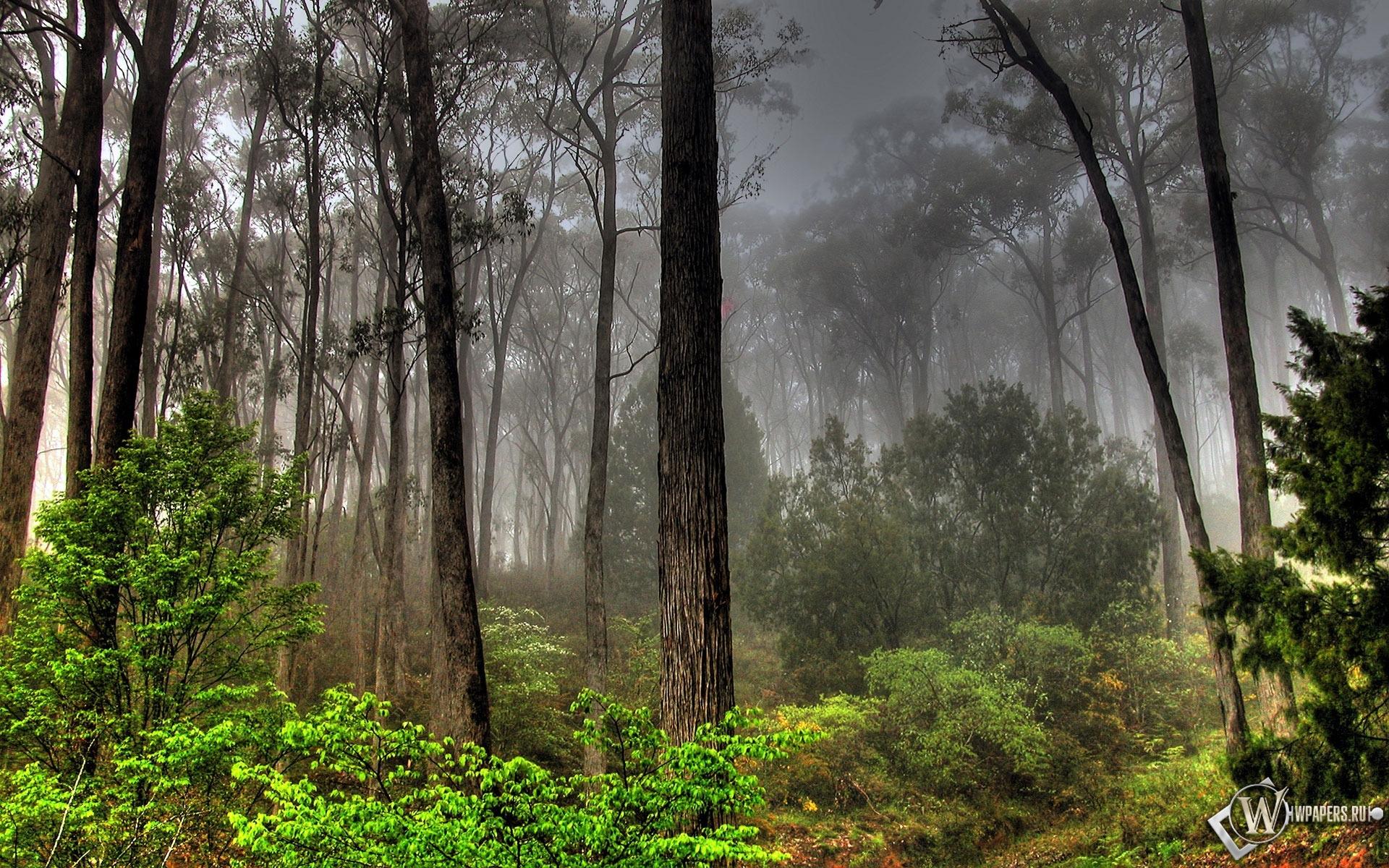 Лесной пейзаж 1920x1200
