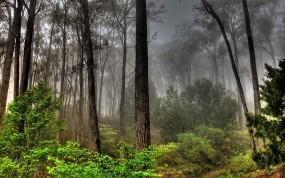 Обои Лесной пейзаж: Лес, Деревья, Небо, Пейзаж, Прочие пейзажи