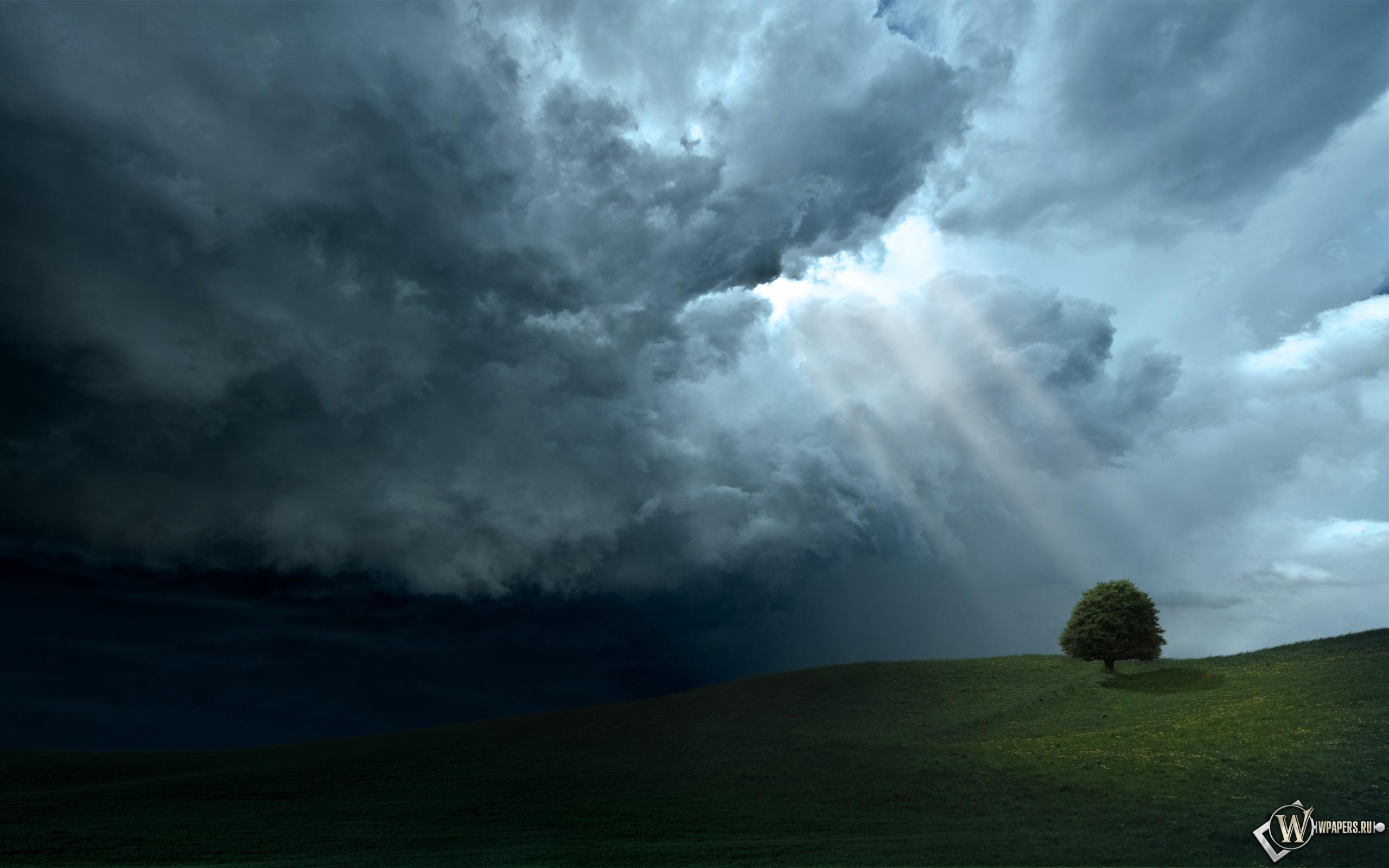 Свет на дерево 2560x1600
