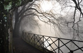Туман в парке