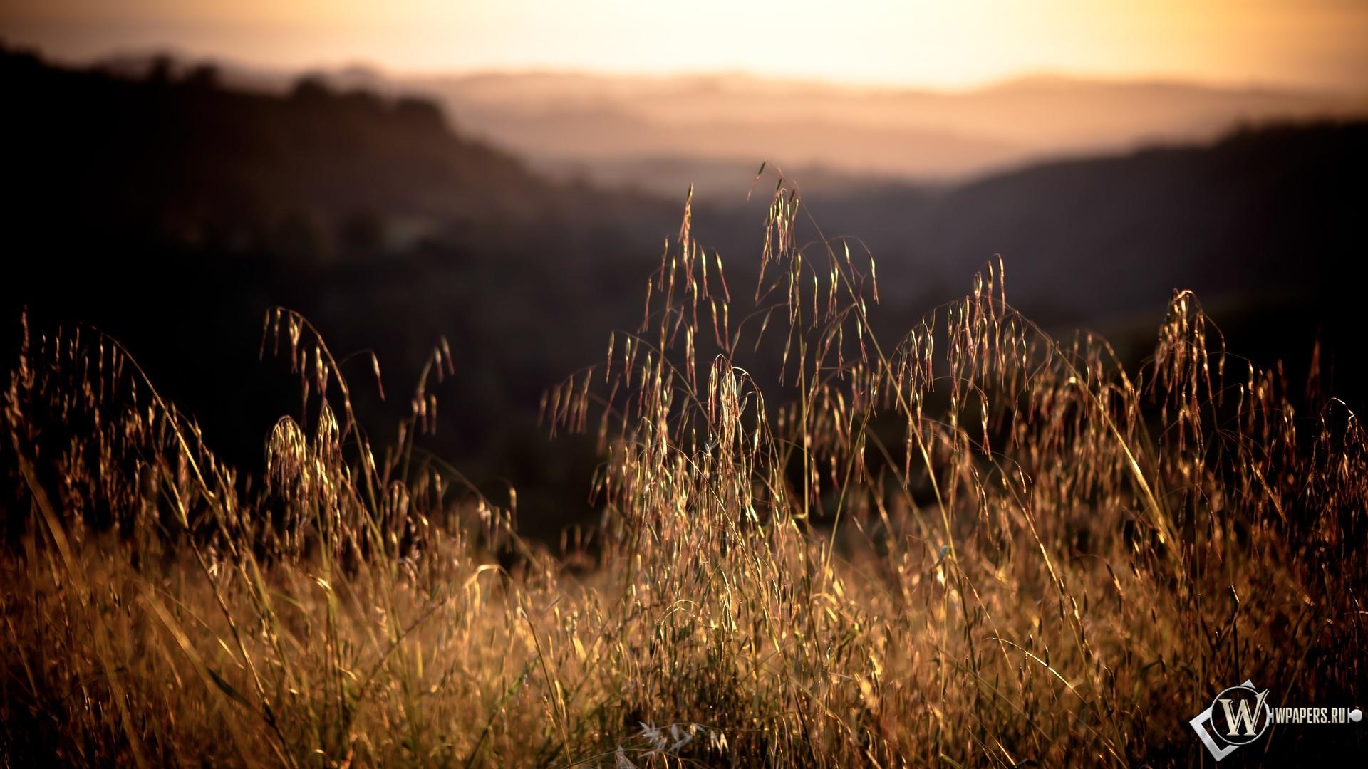 Горные травы 1920x1080