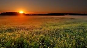 Обои Утро: Природа, Солнце, Туман, Поле, Утро, Прочие пейзажи