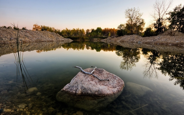 Ветка на камне