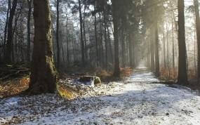Обои Лесная дорожка: Зима, Дорога, Лес, Деревья, Природа, Красота, Осень, Утро, Прочие пейзажи