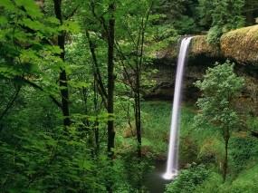 Обои Водопад в лесу: Зелень, Лес, Водопад, Водопады