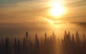 Обои Зимний рассвет: Зима, Деревья, Солнце, Туман, Зима