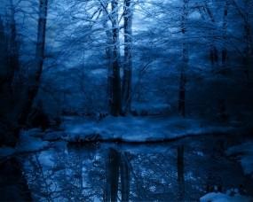 Обои Зимняя ночь в лесу: Зима, Снег, Лес, Деревья, Иней, Мрак, Холод, Синий, Зима