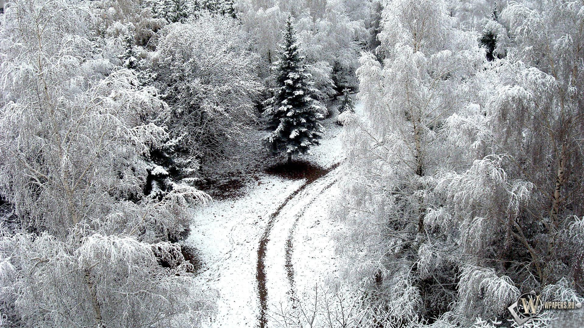 Зимний лес 1920x1080