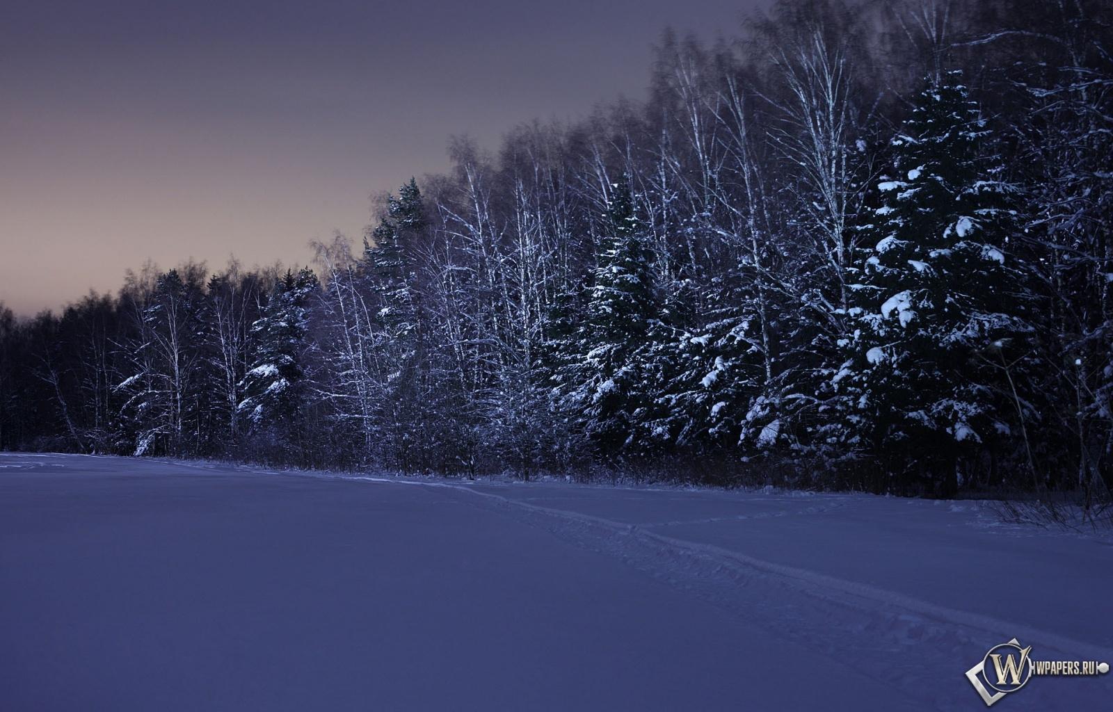 Ночь в зимнем лесу 1600x1024