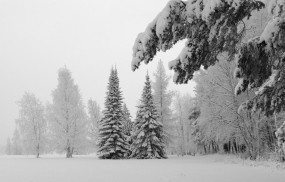 Обои Зимний пейзаж: Зима, Снег, Природа, Ель, Пейзажи, Зима