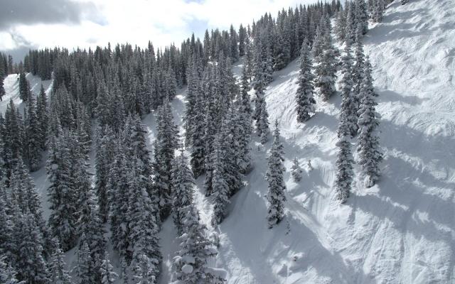 Зимний лес на склоне