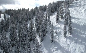 Обои Зимний лес на склоне: Зима, Снег, Гора, Склон, Зима