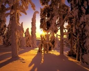 Обои Зима в Финляндии: Зима, Тени, Снег, Лес, Финляндия, Зима