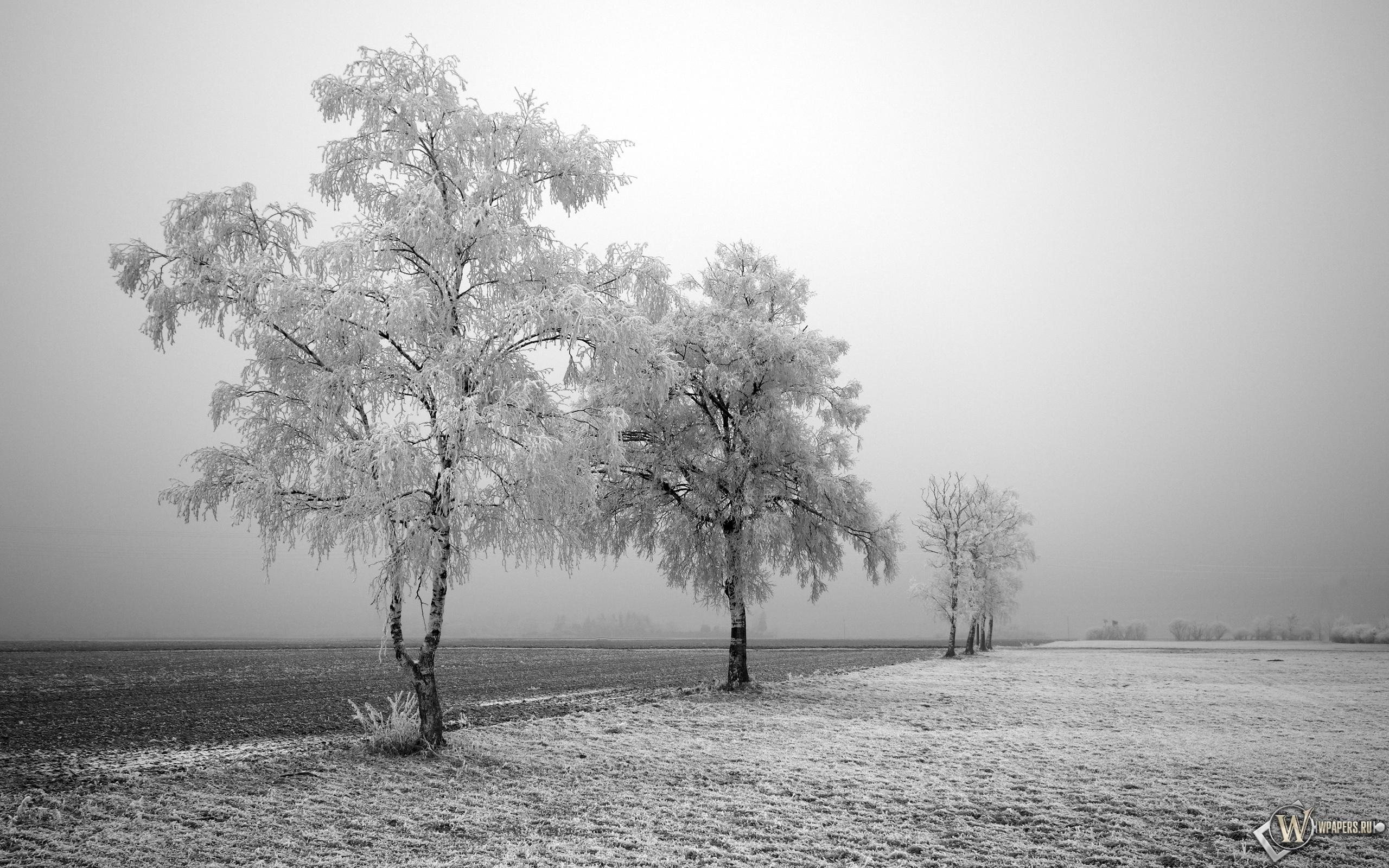 Заснеженные деревья 2560x1600
