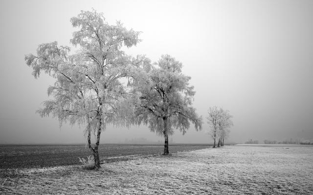 Заснеженные деревья