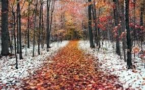 Обои Ранняя зима: Зима, Лес, Дорожка, Зима