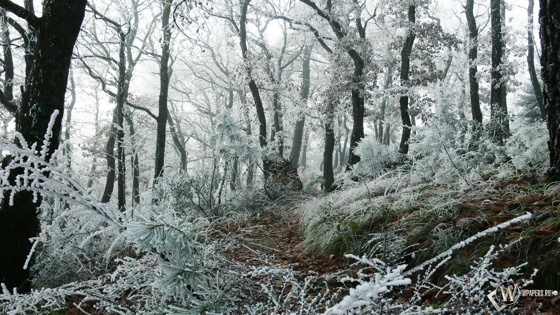 Первый снег 1920x1080