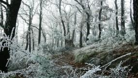 Обои Первый снег: Снег, Лес, Деревья, Зима