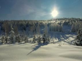 Обои Зимний пейзаж: Зима, Снег, Деревья, Солнце, Зима