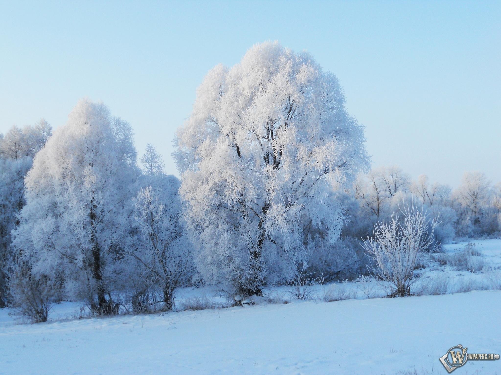 Зимнее утро 2048x1536
