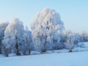Обои Зимнее утро: Зима, Природа, Утро, Прочие пейзажи
