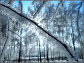 Обои Ветка зимы: Зима, Свет, Снег, Иней, Ветка, Макро, Зима