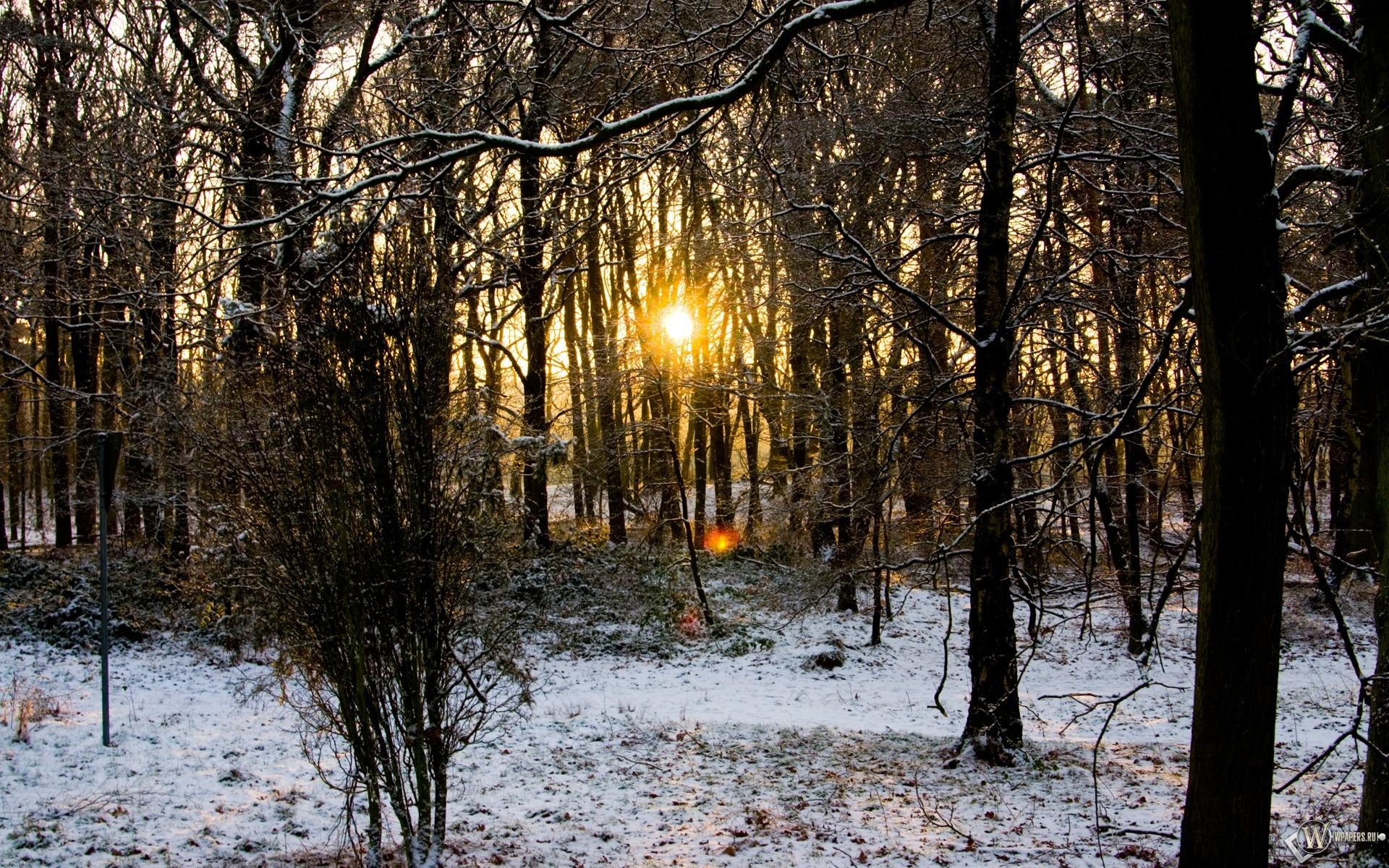 Осенне-Зимний лес 1920x1200
