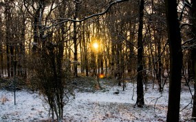 Осенне-Зимний лес