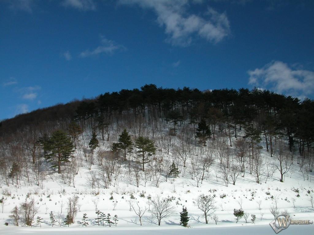Лесная горка в снегу 1024x768