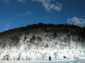 Обои Лесная горка в снегу: , Зима