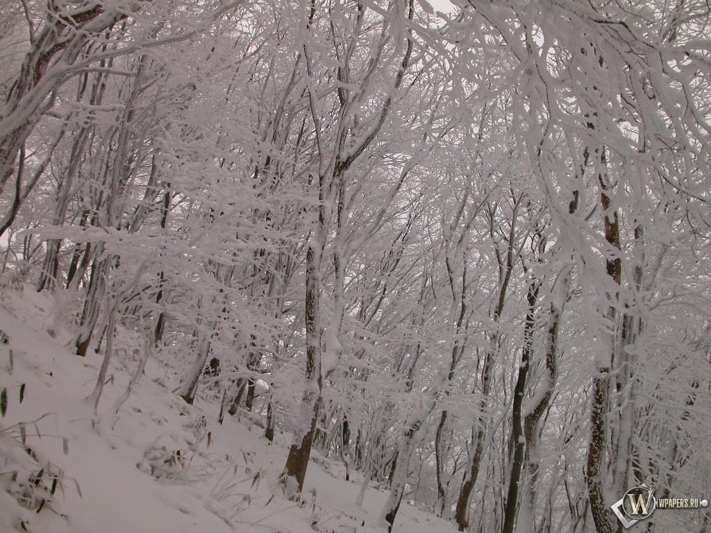 Склон с деревьями зимой 1024x768