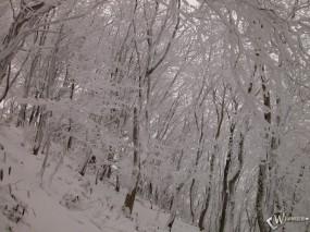 Обои Склон с деревьями зимой: , Зима