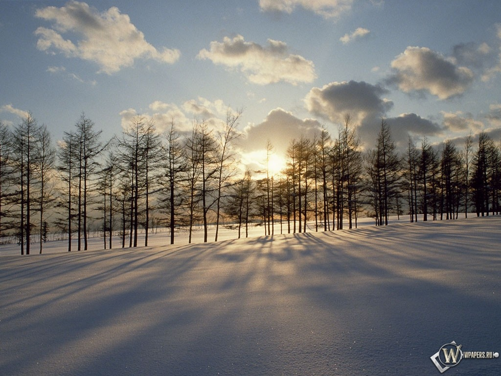 Солнце за зимними деревьями 1024x768