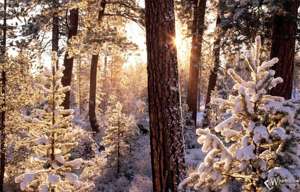 Зимний лес 1200x768