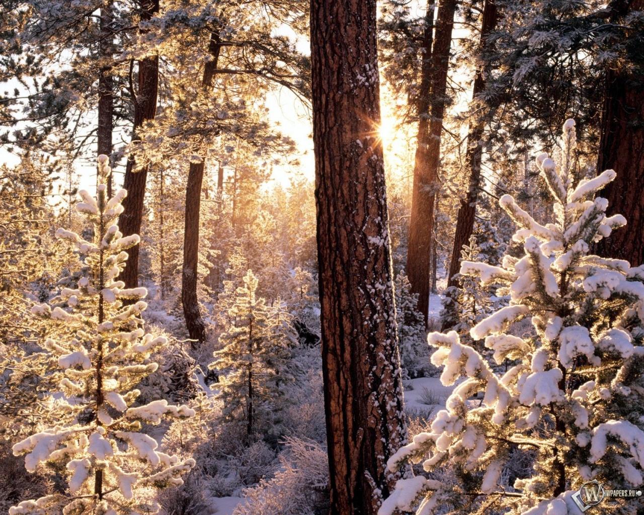 Зимний лес 1280x1024
