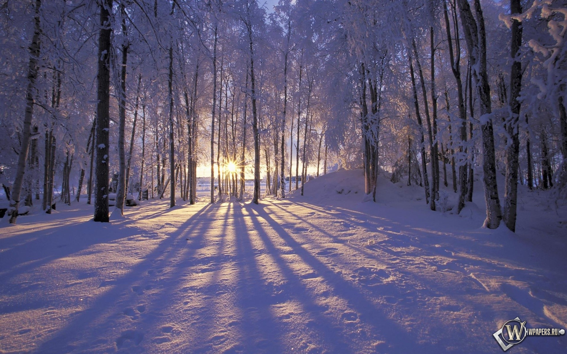 Солнце за деревьями 1920x1200