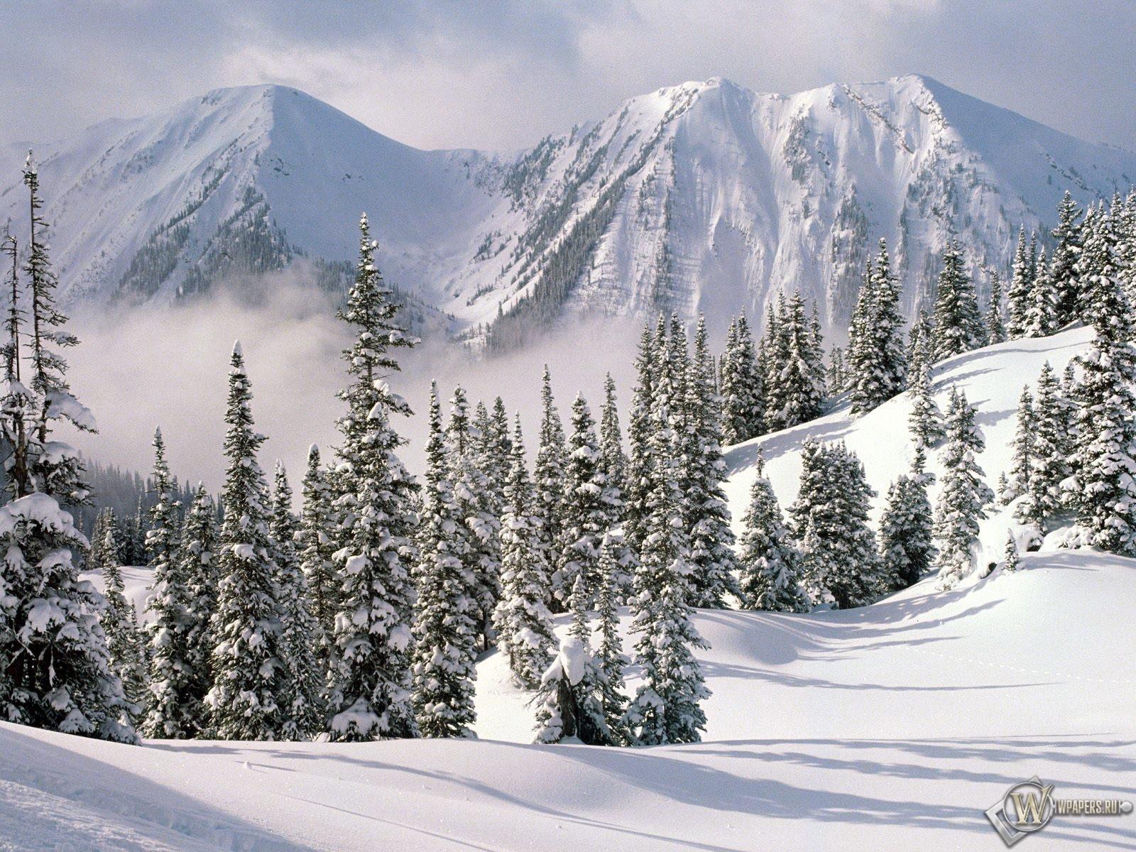 Снежные ели 1600x1200